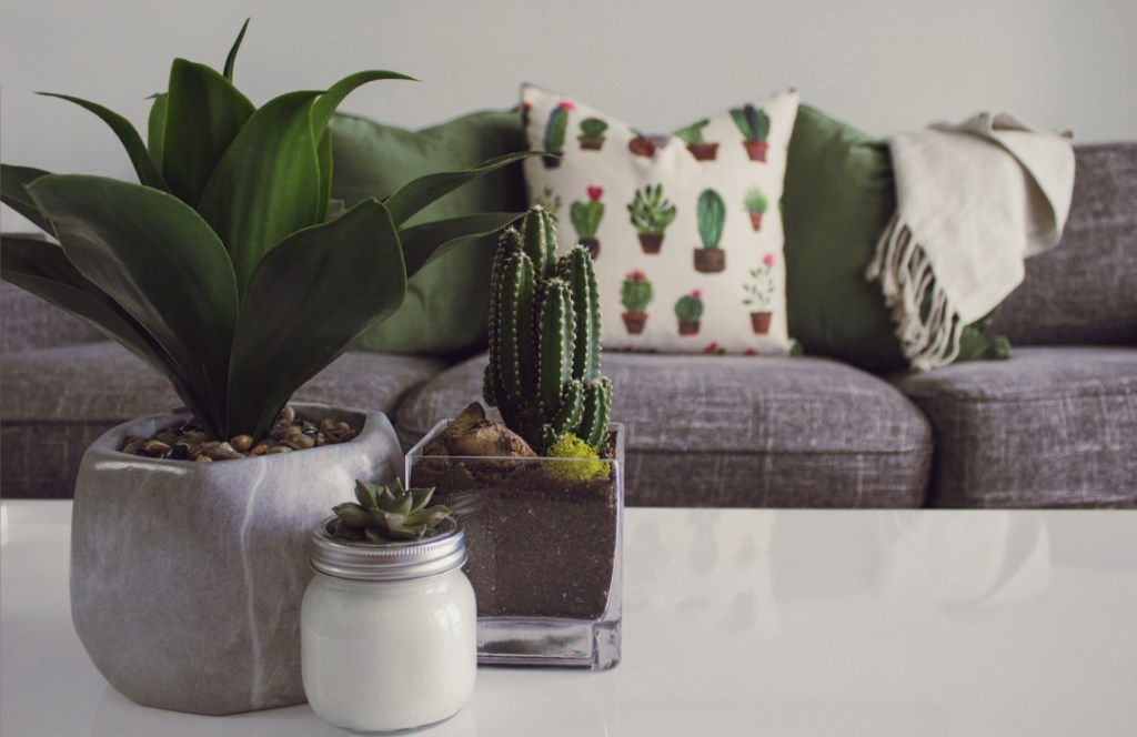 Increíbles ideas para decorar tu casa con plantas