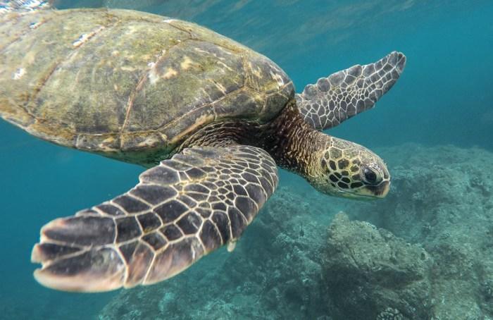 El software libre de Cuenca que busca preservar tortugas mexicanas