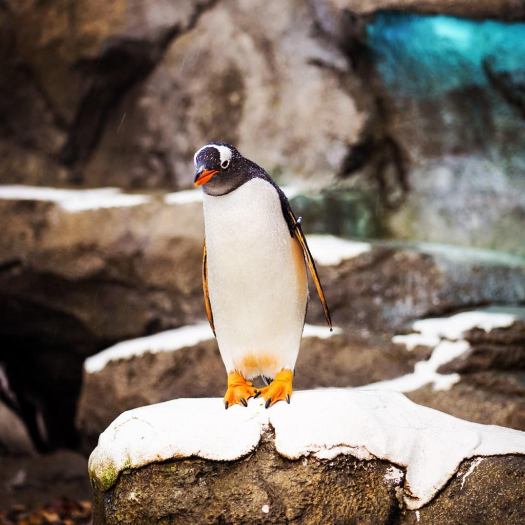 Para búsquedas relacionadas a pingüinos, Antártida, hallazgo