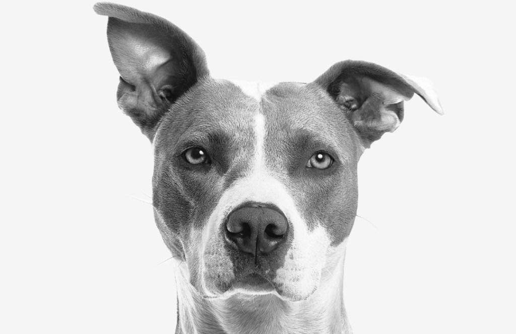 """Los perros pueden distinguir a las """"malas personas"""""""