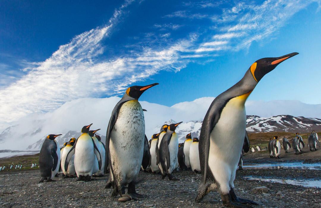 La mejor noticia de hoy… ¡Aparecen más pingüinos en la Antártida!