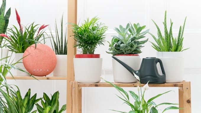 Estas macetas te dirán cuándo regar tus plantas