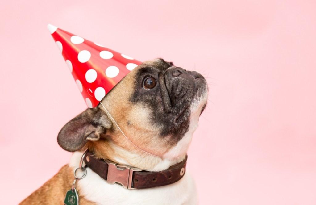 5 acciones que seguro haces y que tu perro odia