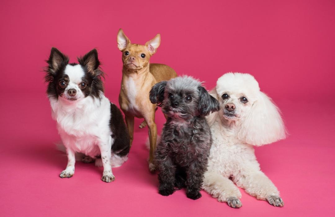 ¡Contra el maltrato animal! Policías podrán entrar a casas para rescatar animales