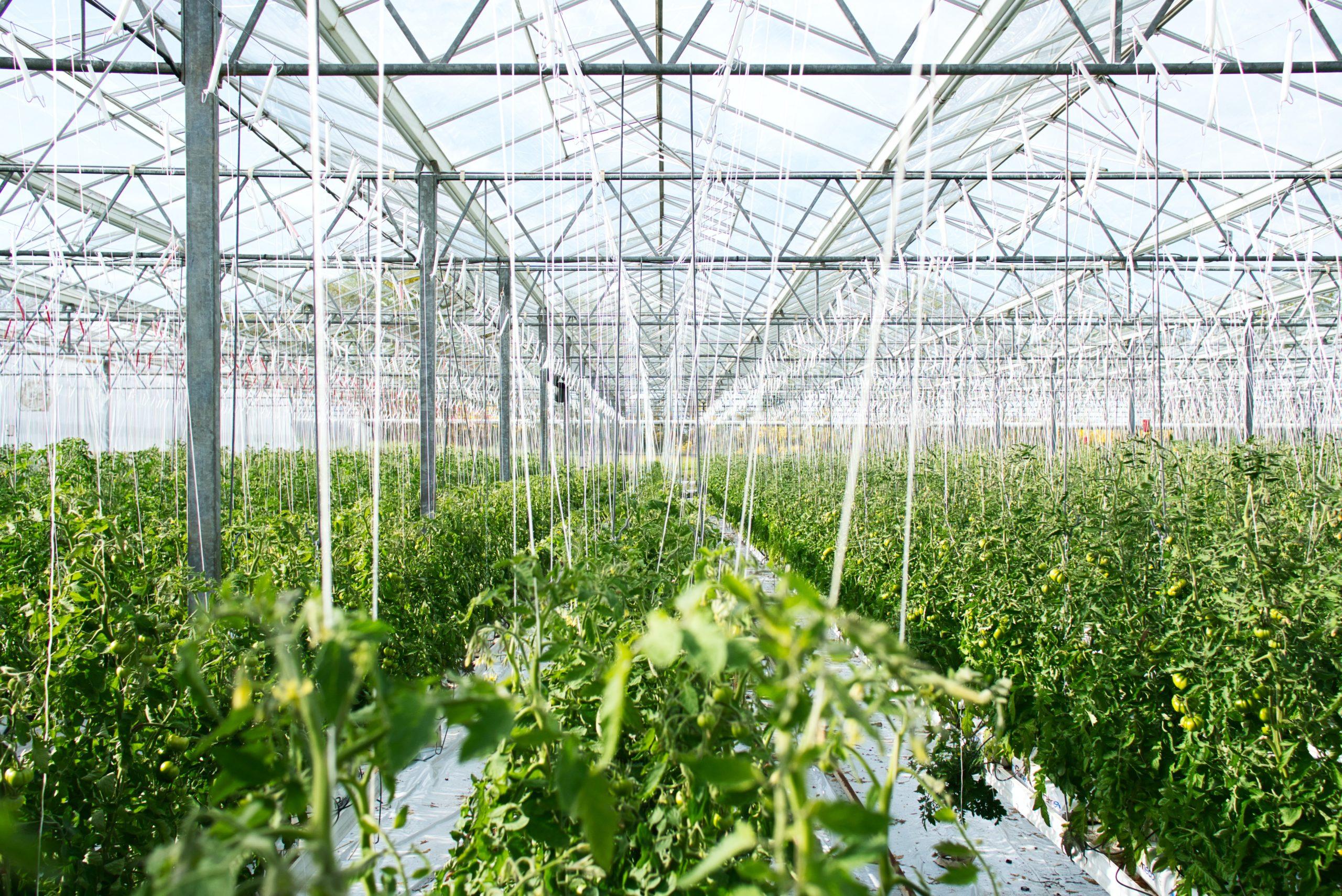 Así es el invernadero de azotea más grande del mundo de Lufa Farms