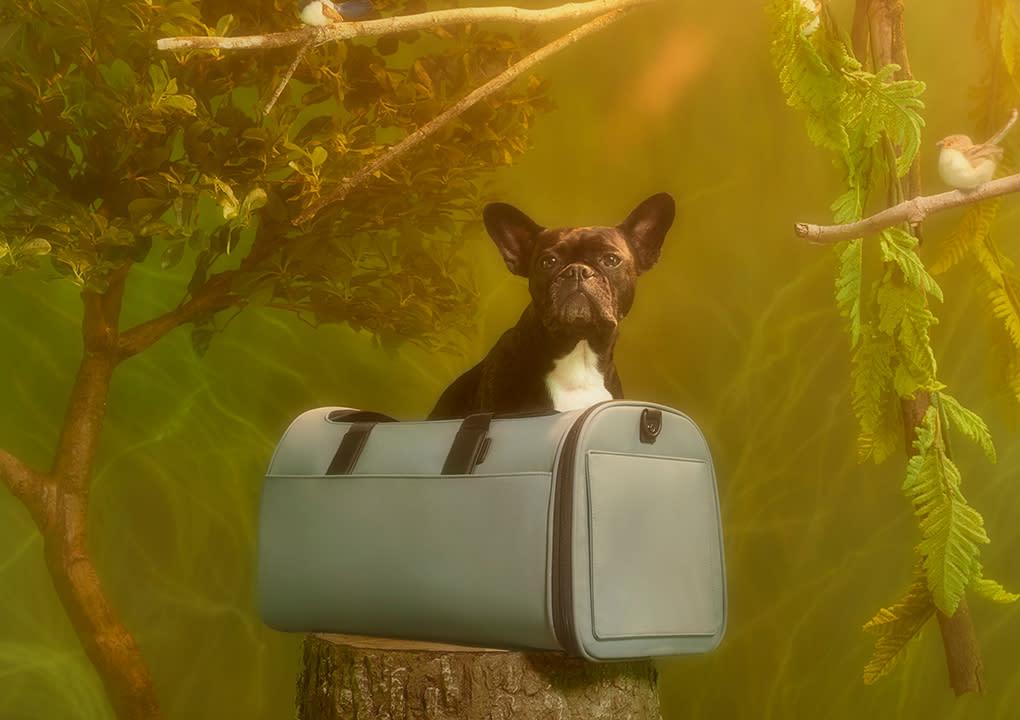 La maleta de Away para que tu mascota viaje con el lujo que merece