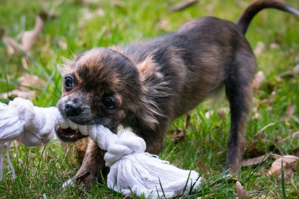 Un estudio revela el ranking de los perros más juguetones