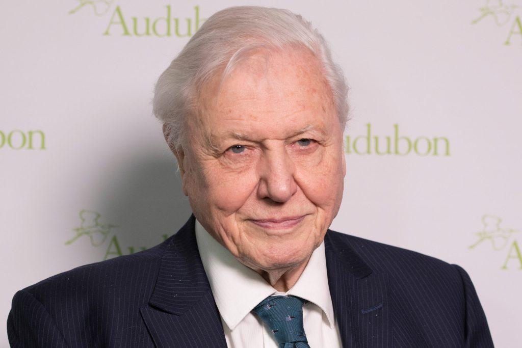 Sir David Attenborough abre Instagram para convencerte de salvar el planeta