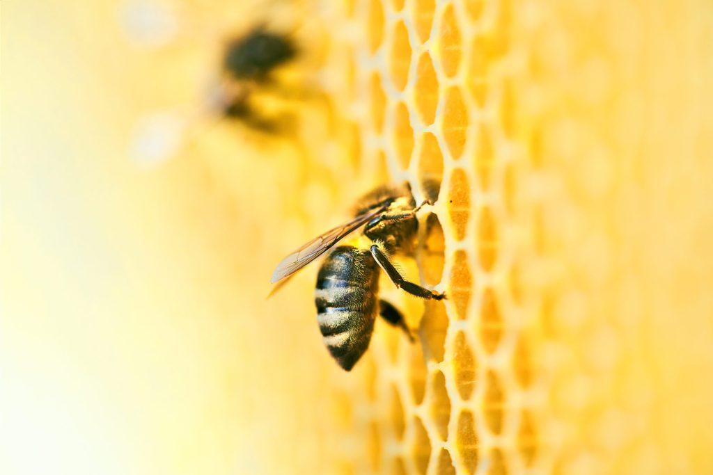 Es un hecho: la miel de las abejas evita que la piel envejezca