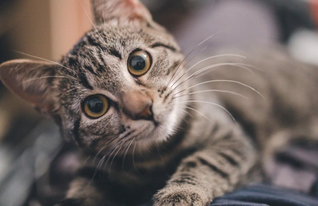 ¿Gato nuevo? Trucos que nadie te ha dicho para mejorar su comportamiento