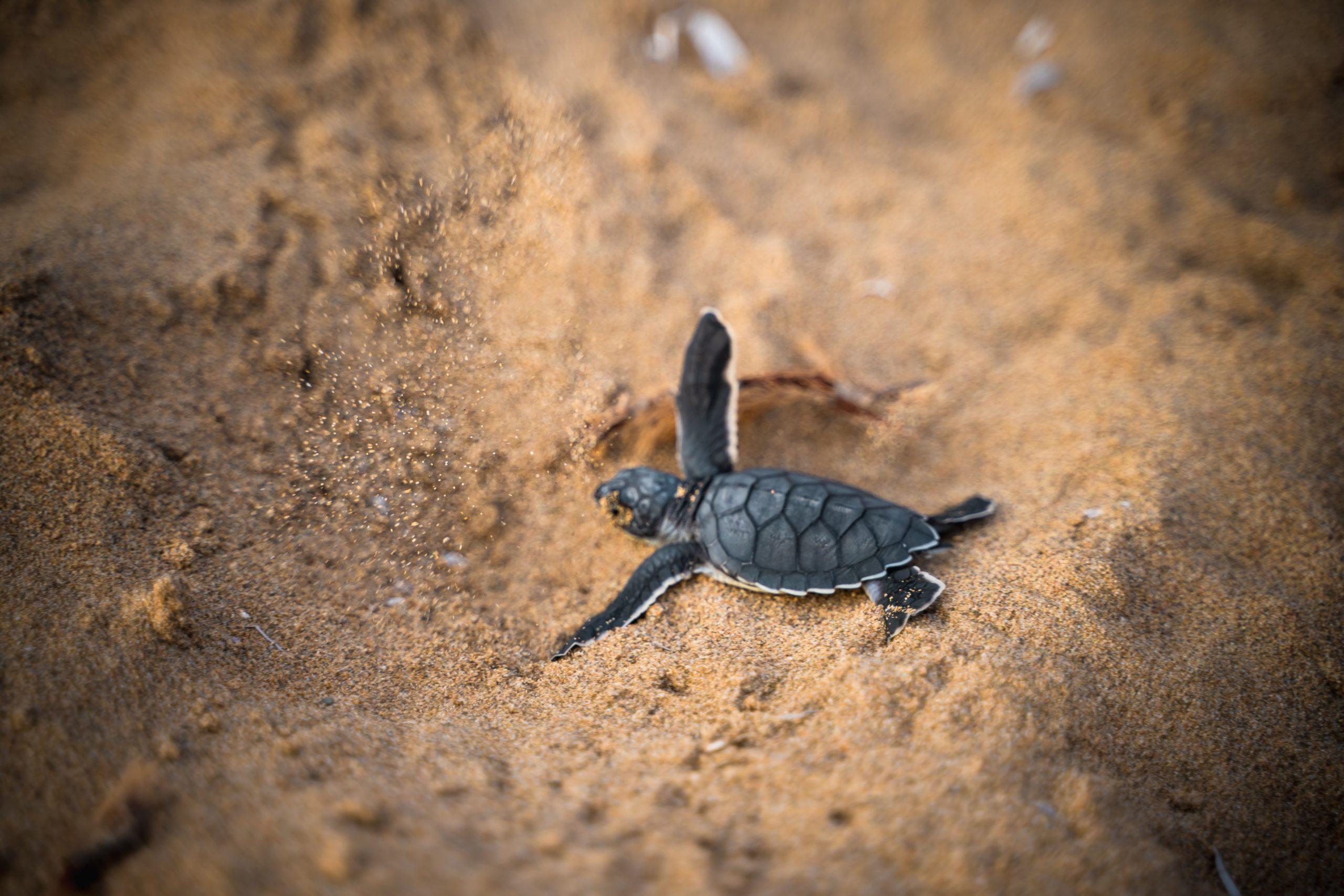 Un sistema de GPS inspirado en 'Breaking Bad' ayudaría a rastrear los huevos de tortuga robados