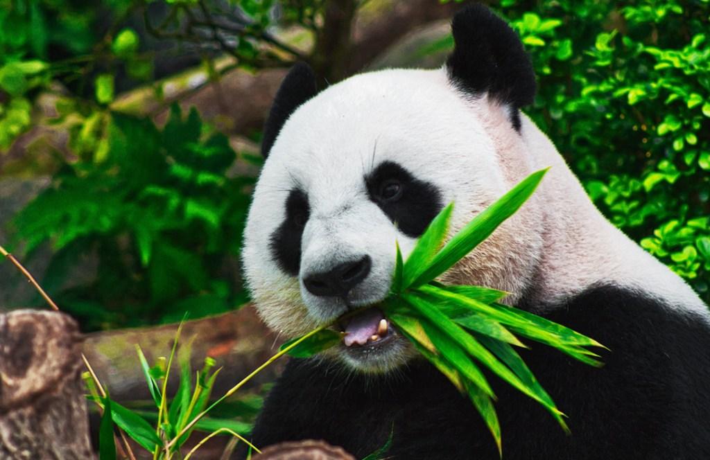 Para búsquedas relacionadas a animales en peligro de extinción
