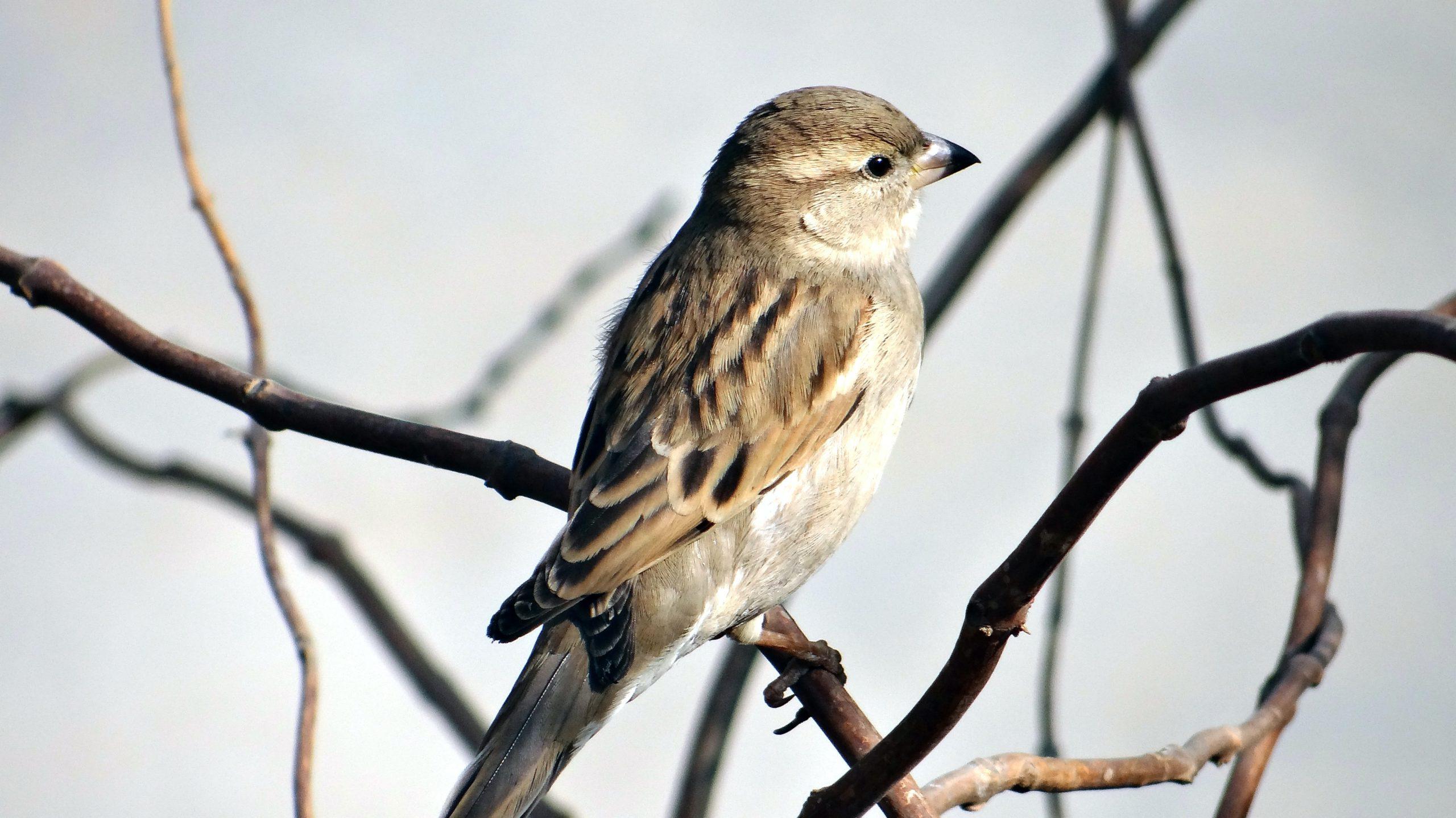 Ahora los pájaros cantan con más libertad gracias al confinamiento por la pandemia