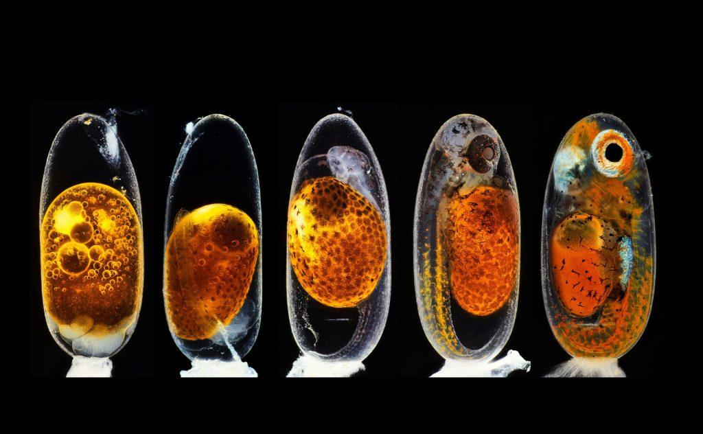 La belleza de lo microscópico: las imágenes ganadoras del concurso Small World de Nikon