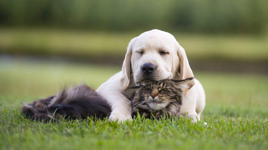 Estos tips te ayudarán a integrar a una segunda mascota en tu hogar