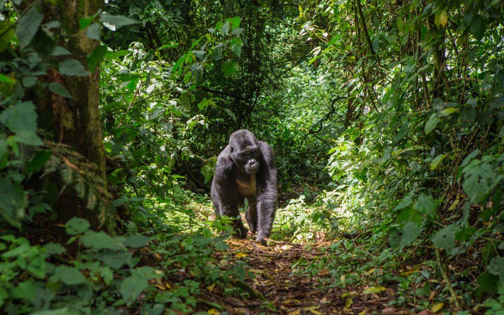 Conoce el proyecto que plantará millones de árboles en Uganda