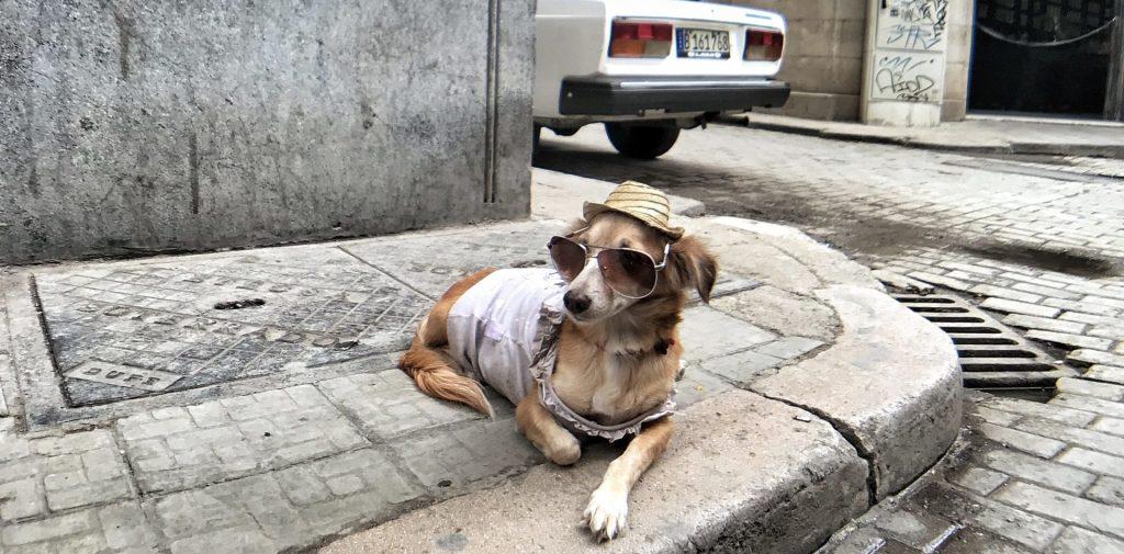 BBVA lanza un seguro digital exclusivamente para mascotas