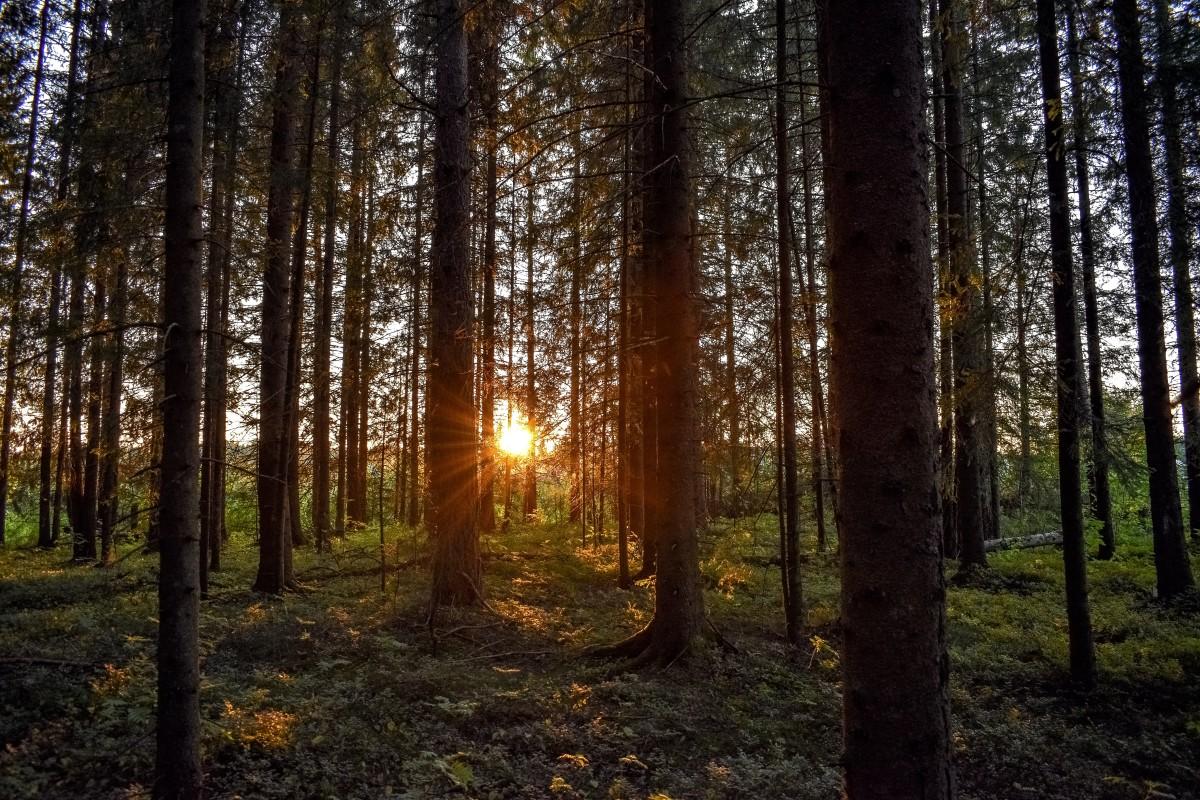 Este mapa interactivo te muestra dónde están los bosques más bellos del mundo