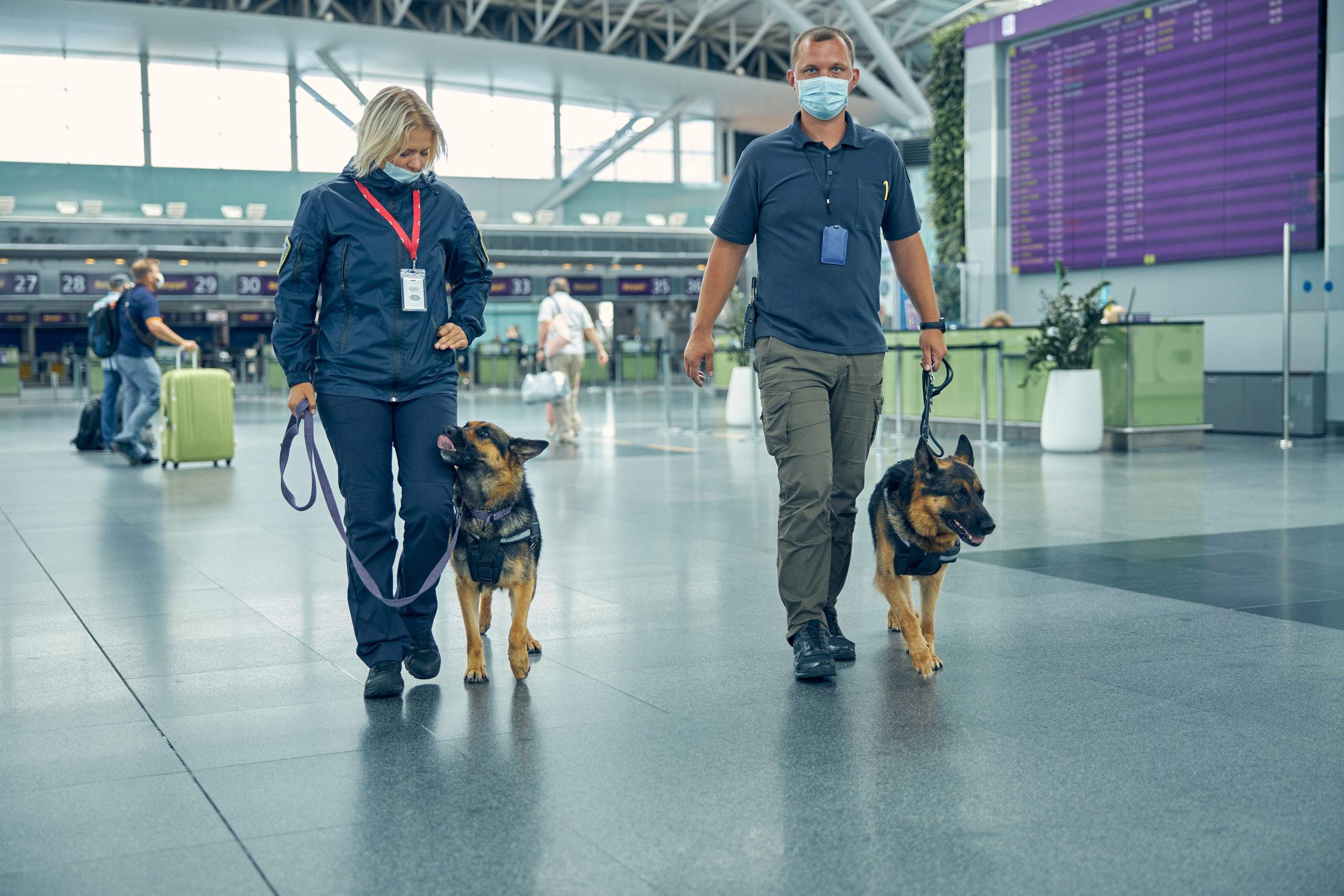 Perros detectan el Covid-19 en viajeros de Finlandia