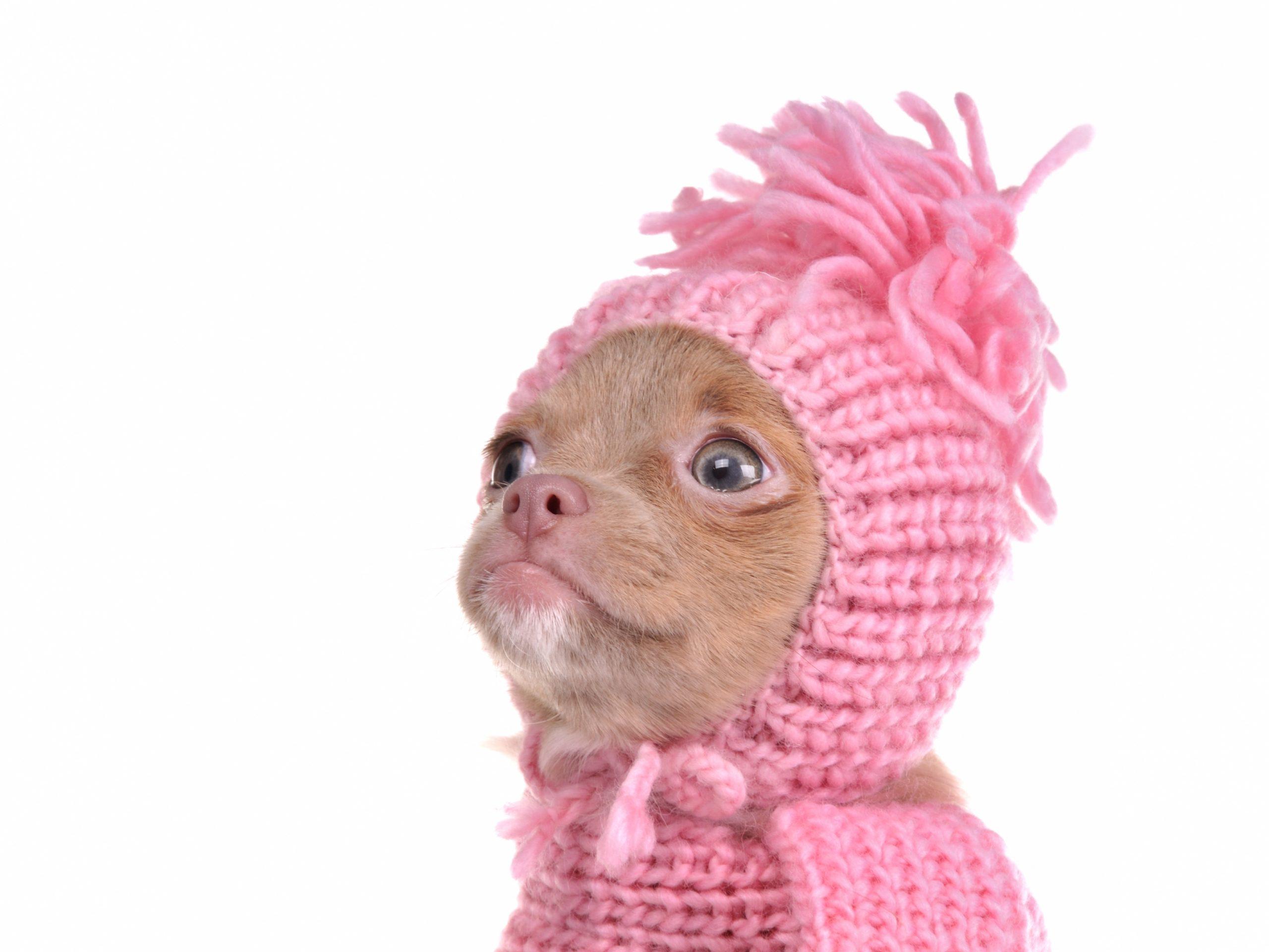 Estos son los perros que sufren más por el frío y que no imaginabas