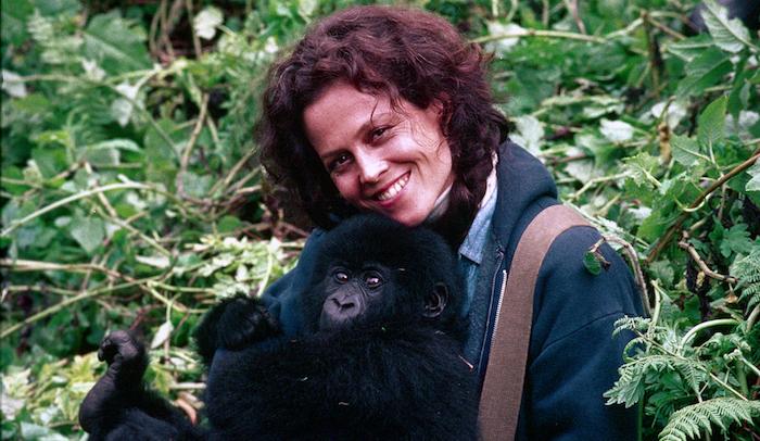 El mono es indispensable para el ecosistema