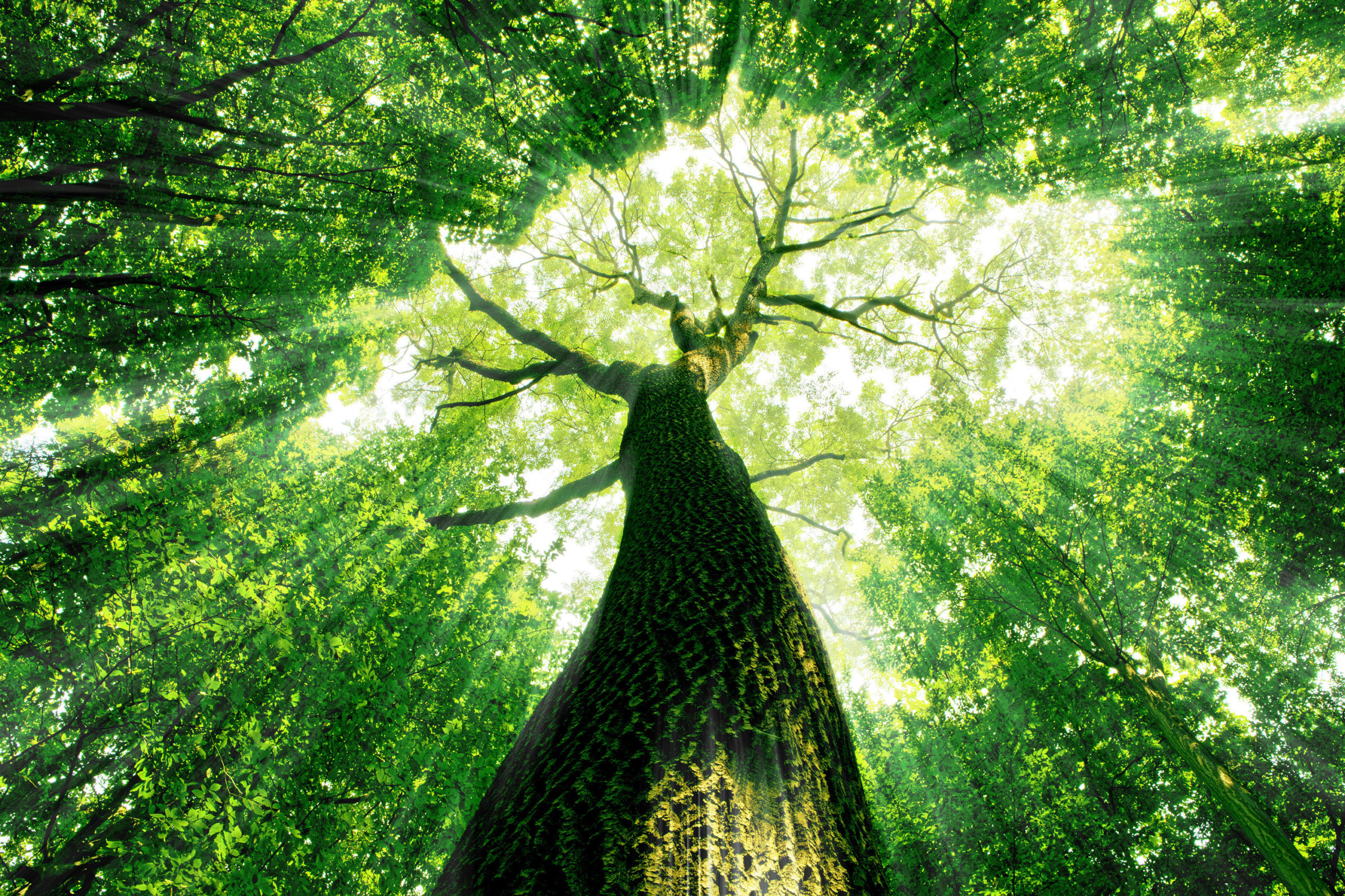India lanza ambicioso plan para proteger a los árboles milenarios