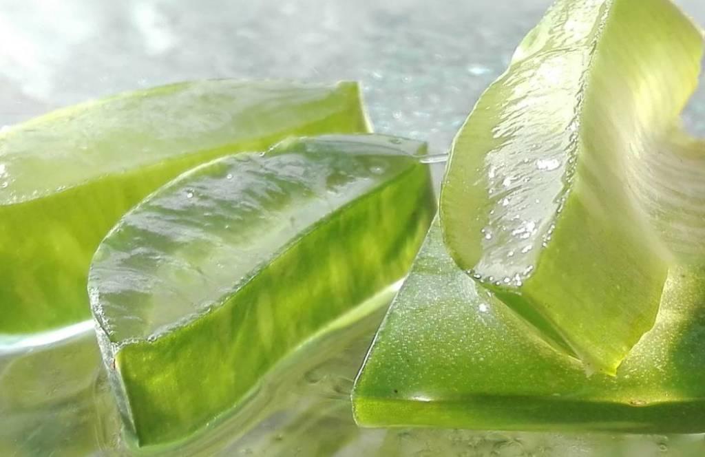 Aloe vera, hierbas y especias para combatir la diabetes