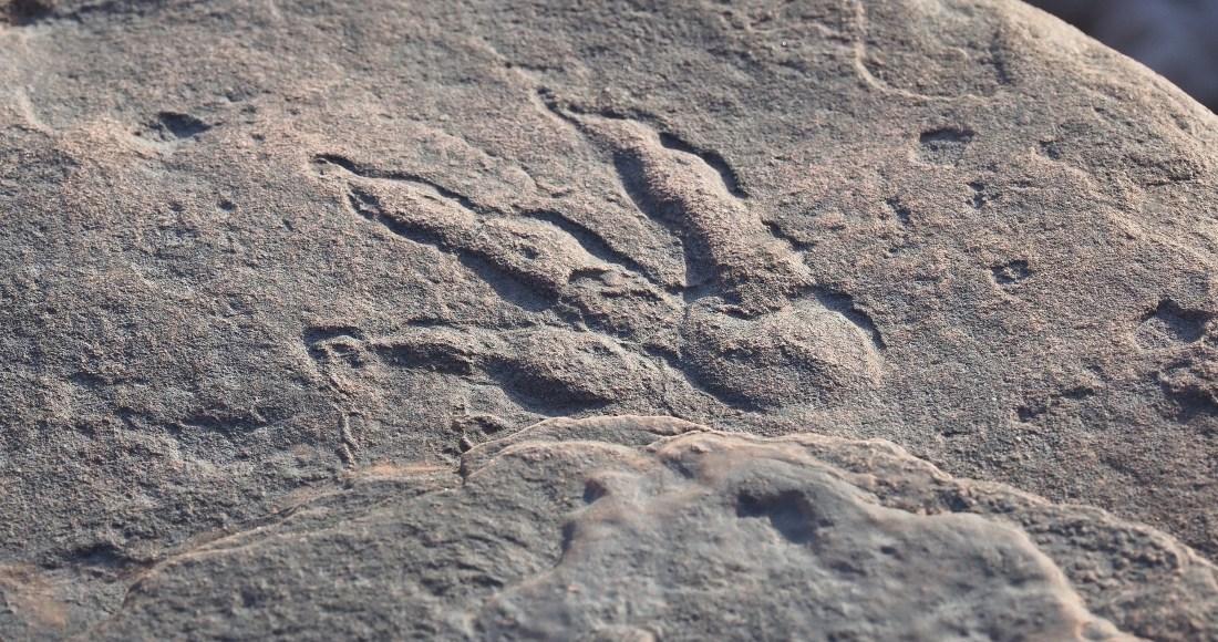Una niña encuentra una huella de dinosaurio de hace 215 millones de años