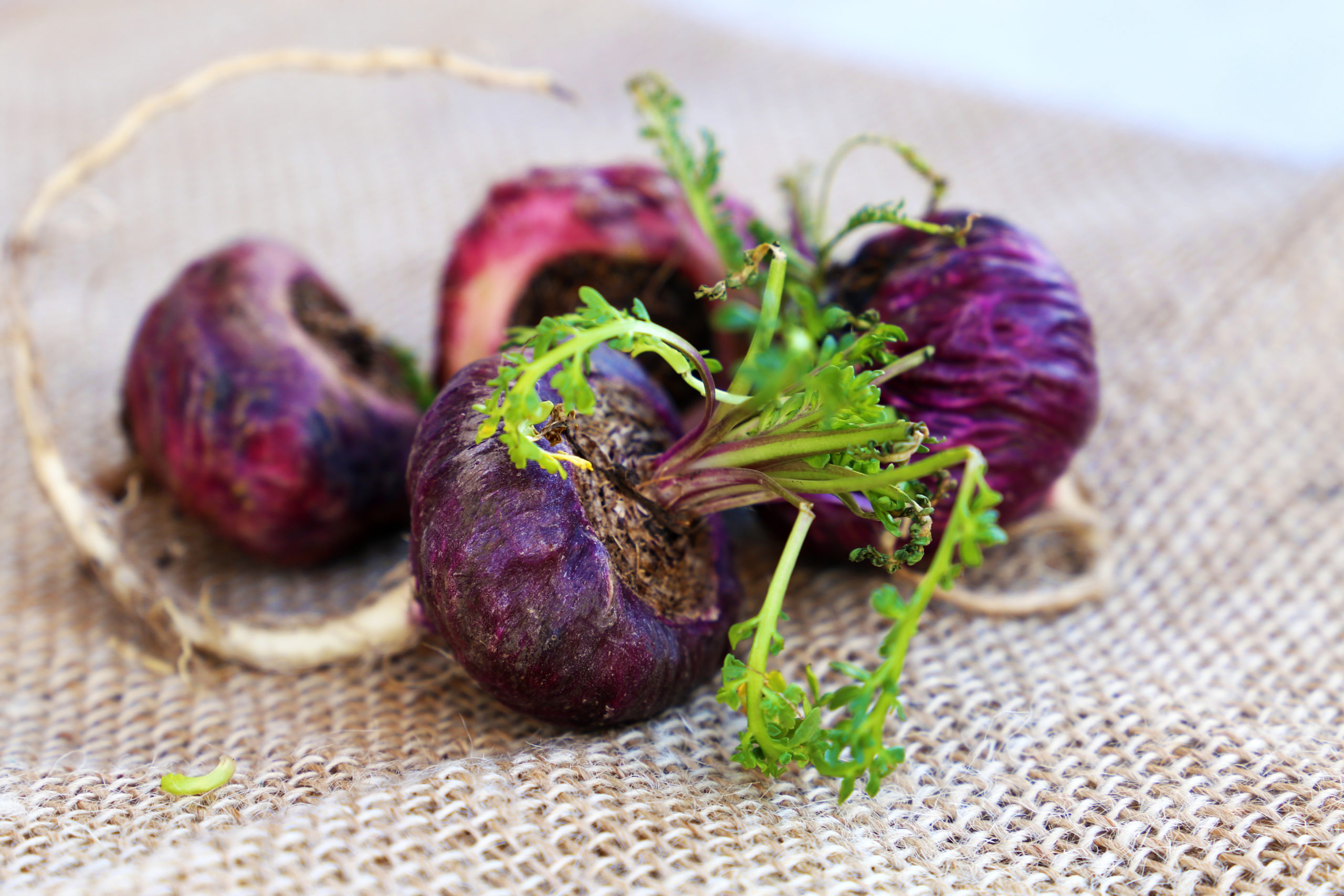 5 increíbles beneficios de la raíz de maca
