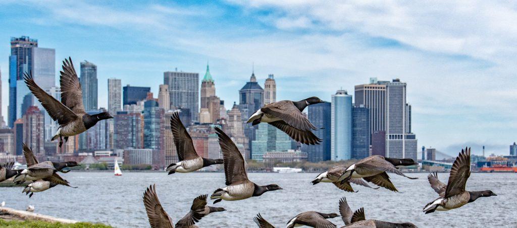 Por estas razones las ciudades necesitan a las aves para sobrevivir