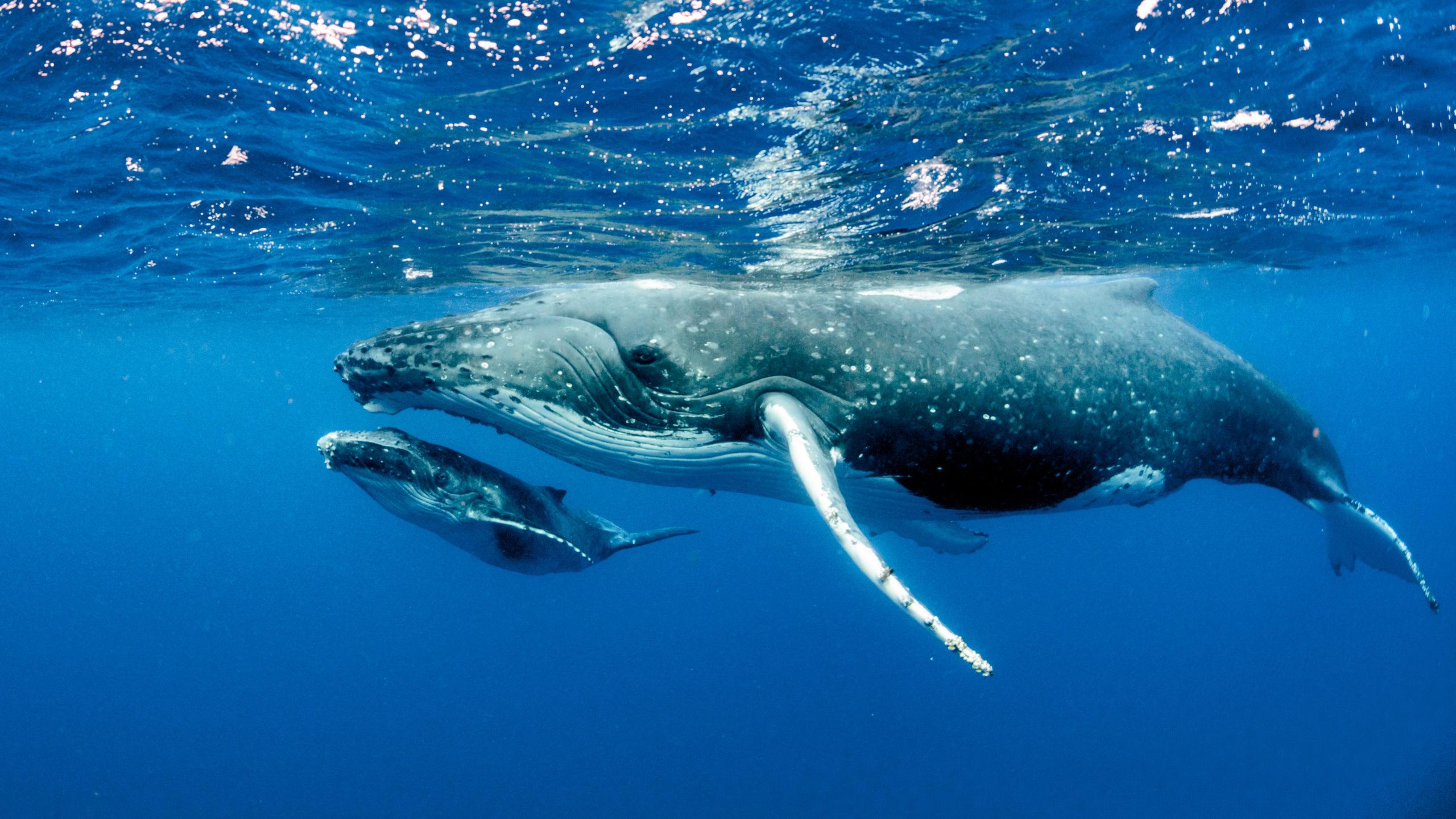 5 especies marinas que viajan a México para reproducirse