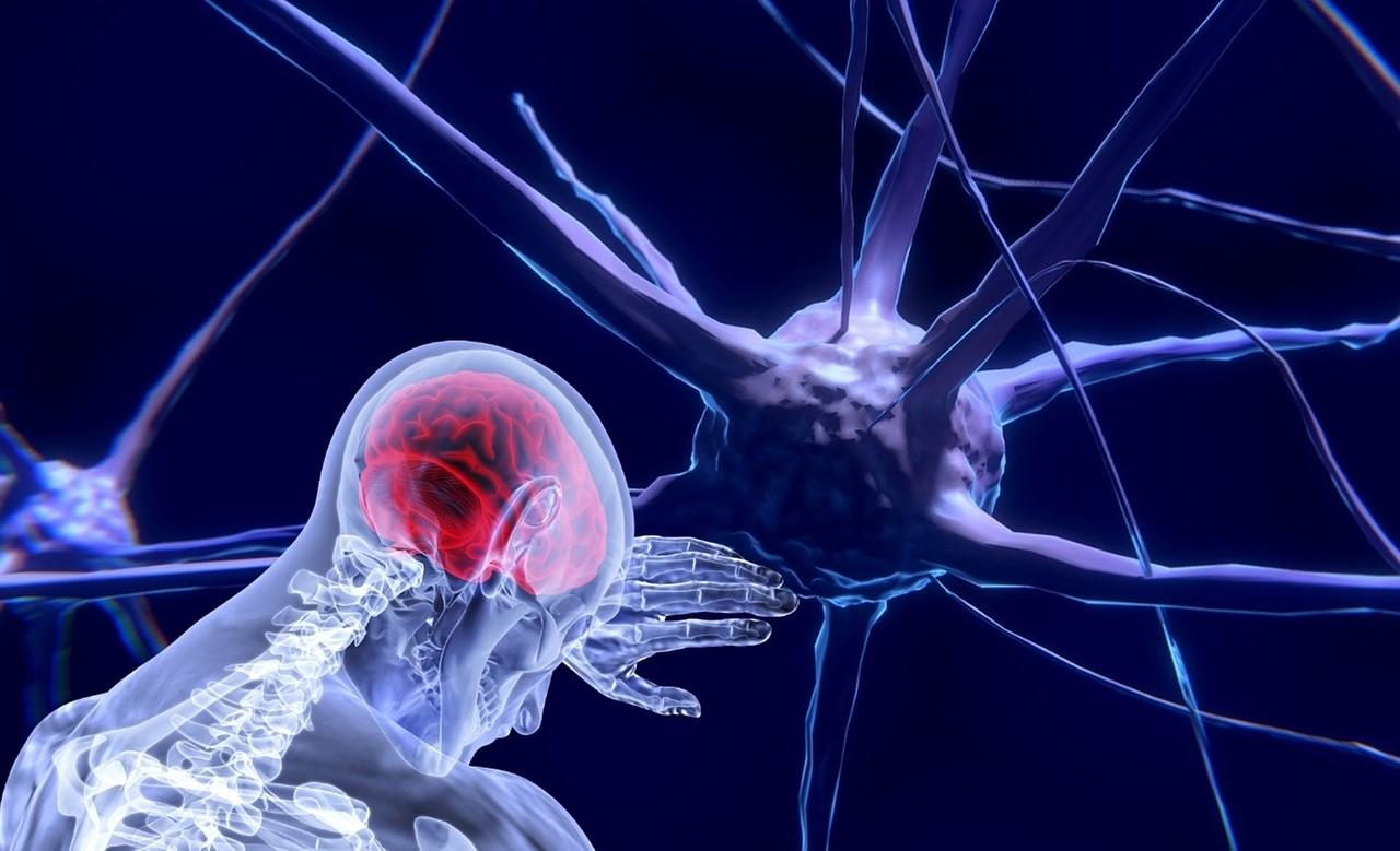 Un tratamiento en ratones puede calmar el dolor crónico en humanos