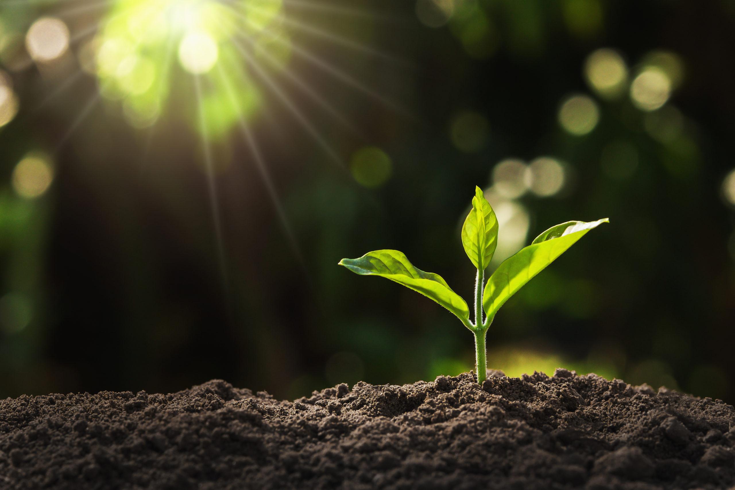 Un 40% de las plantas está en peligro de extinción