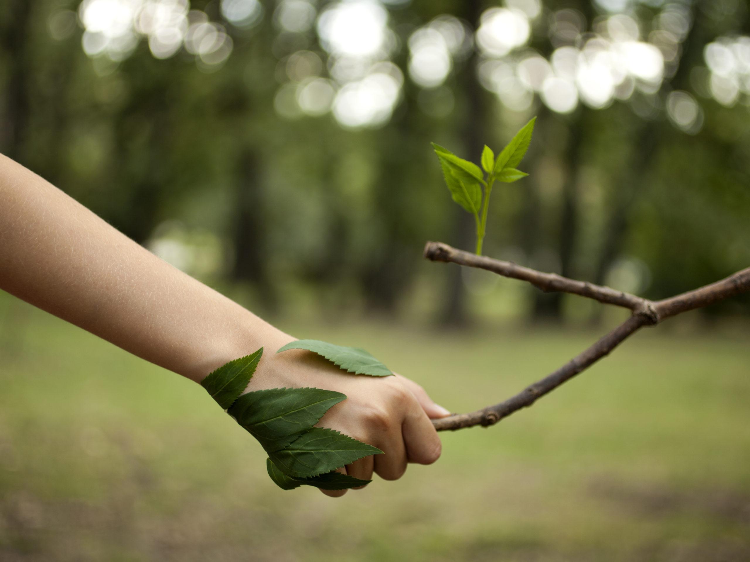 Latinoamérica: destinan 27 millones de dólares a programas de recuperación ambiental