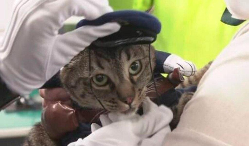 Esta gatita se convirtió en jefa de policía por salvar una vida