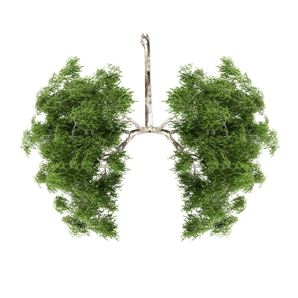 Opinión: Sin salud no hay futuro sostenible