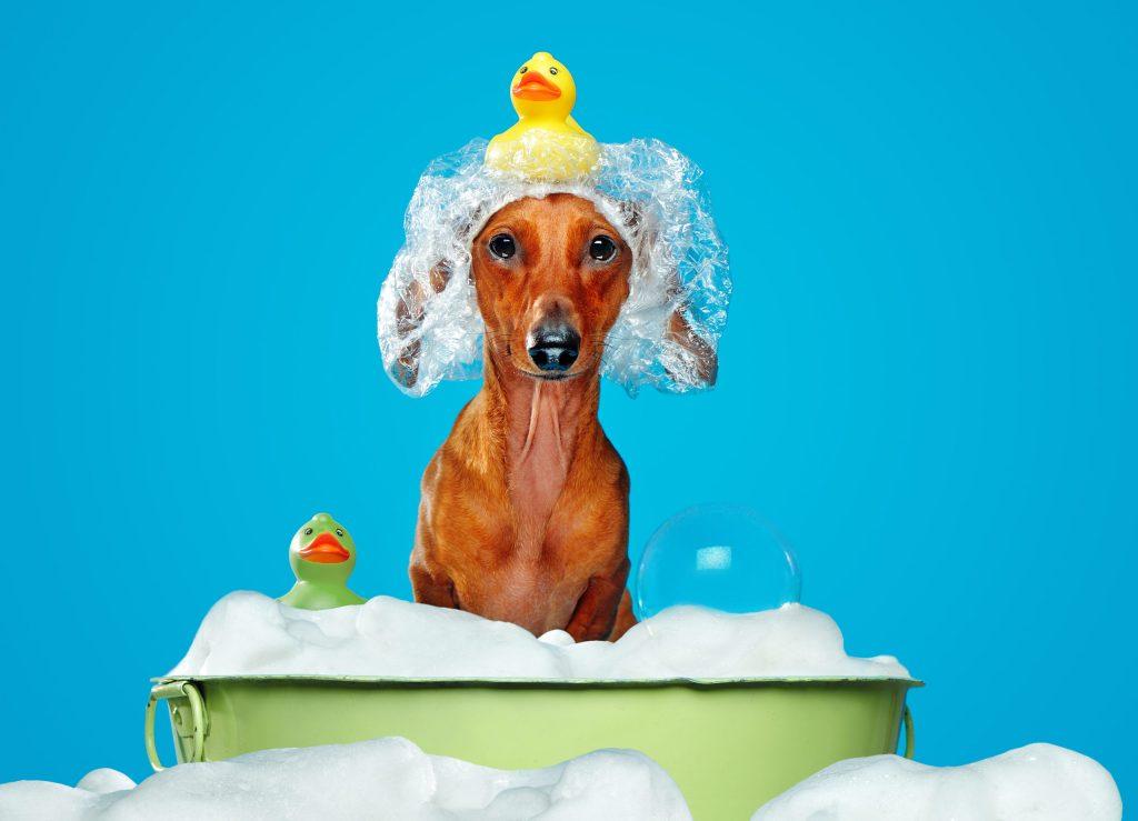 ¿Por qué no debes bañar a tu perro con tu shampoo de pelo?