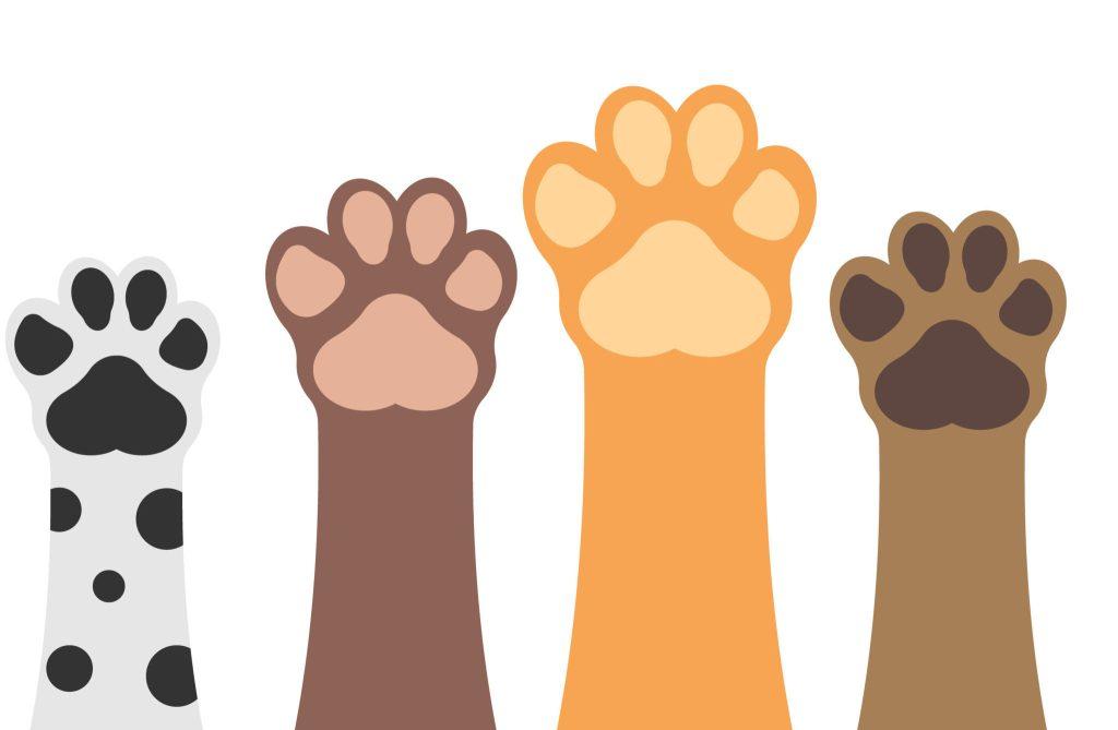 Las patas de los perros son más limpias que las suelas de los zapatos: confirma estudio