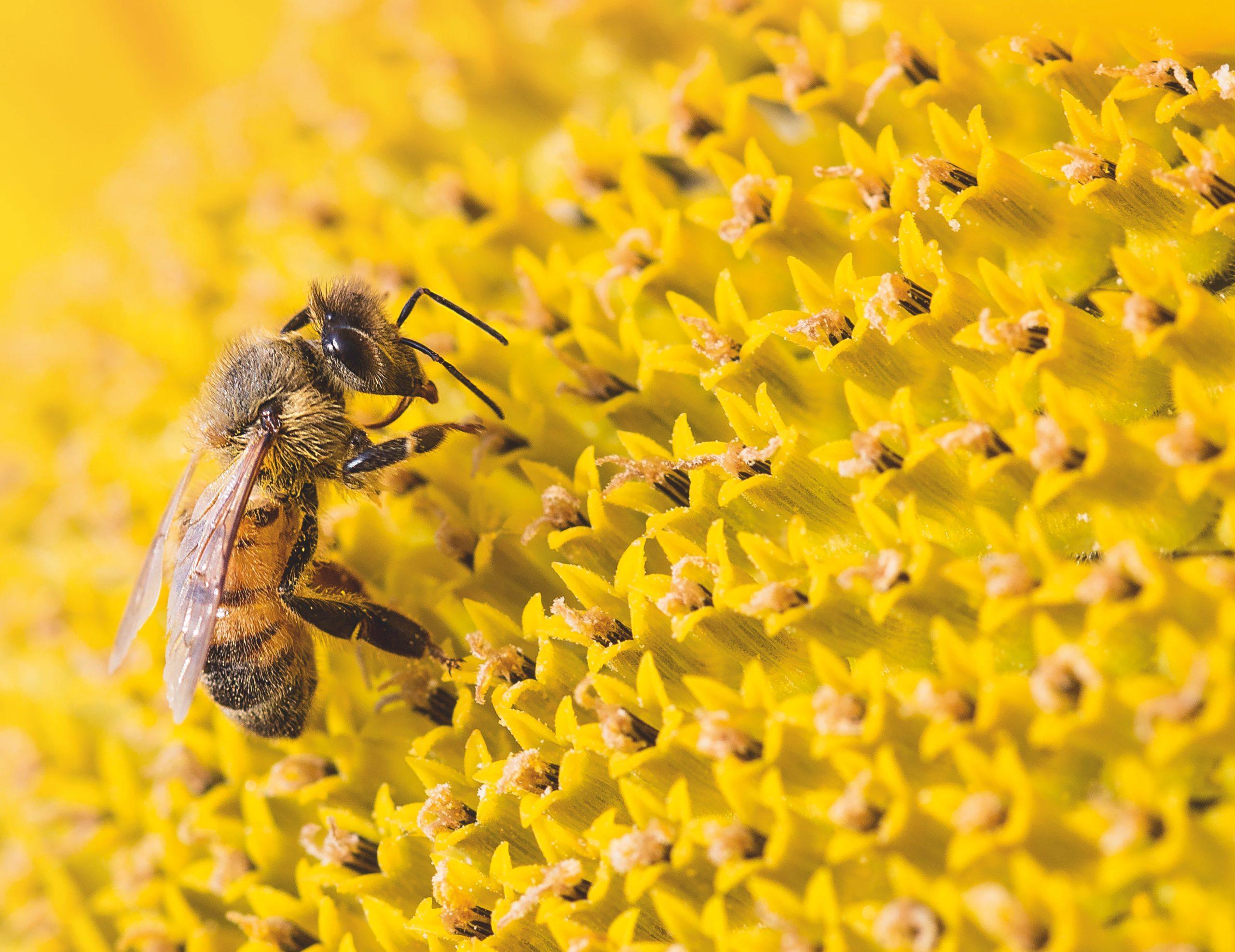 Las abejas, las mejores amigas de nuestro futuro (y Guerlain lo sabe)