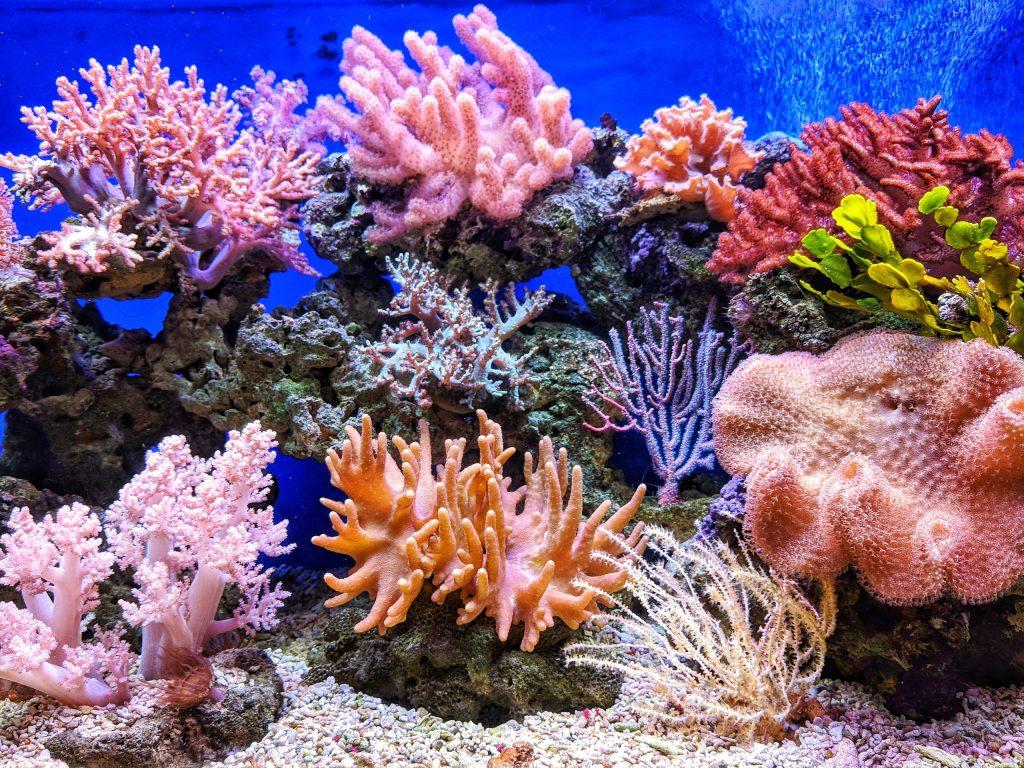Luego de 9 años de auxilio, la barrera de coral de Belice está fuera de peligro