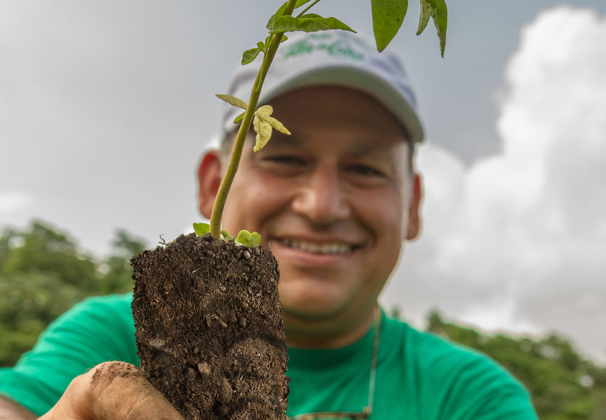 Flor de Caña y One Tree Planted suman esfuerzos para plantar más árboles