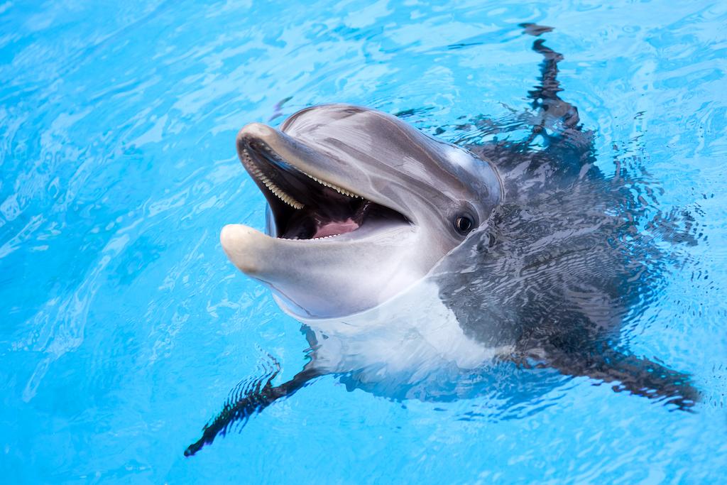 Delfines pueden recordar y reconocer los nombres de sus compañeros