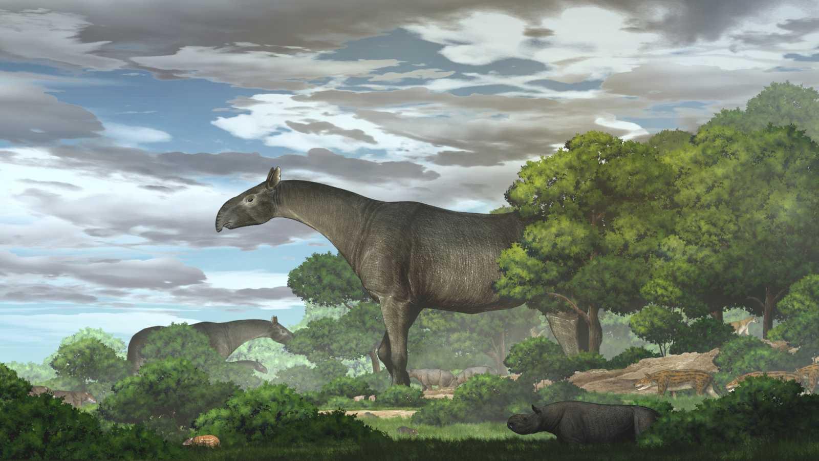 Descubren un rinoceronte gigante que habitó en Asia