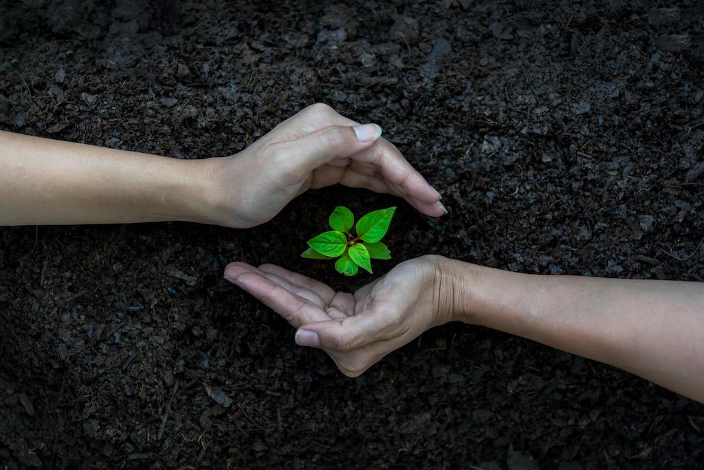 5 beneficios que obtiene el planeta al plantar un árbol
