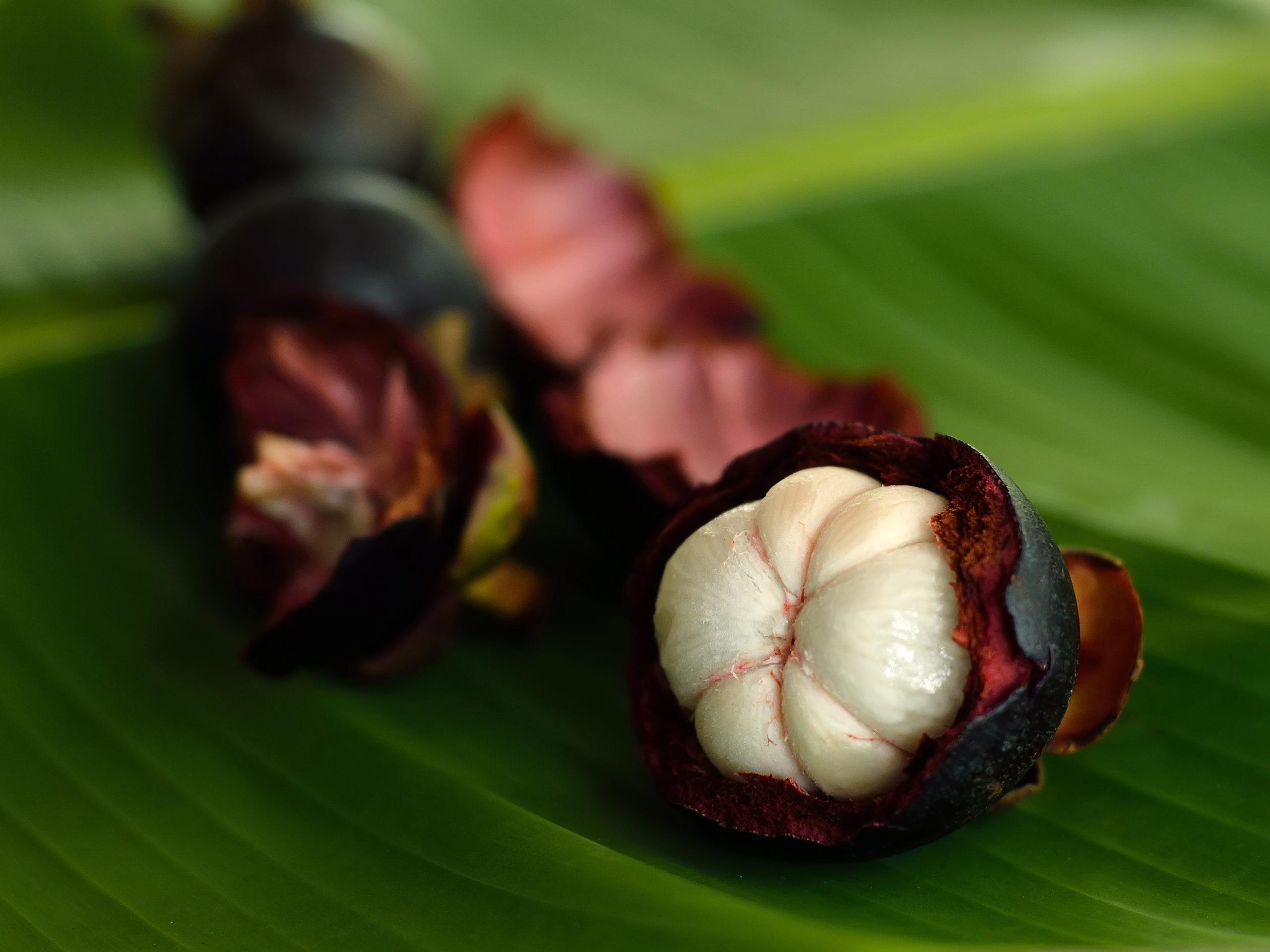Mangostán: la reina de las frutas con grandes propiedades medicinales