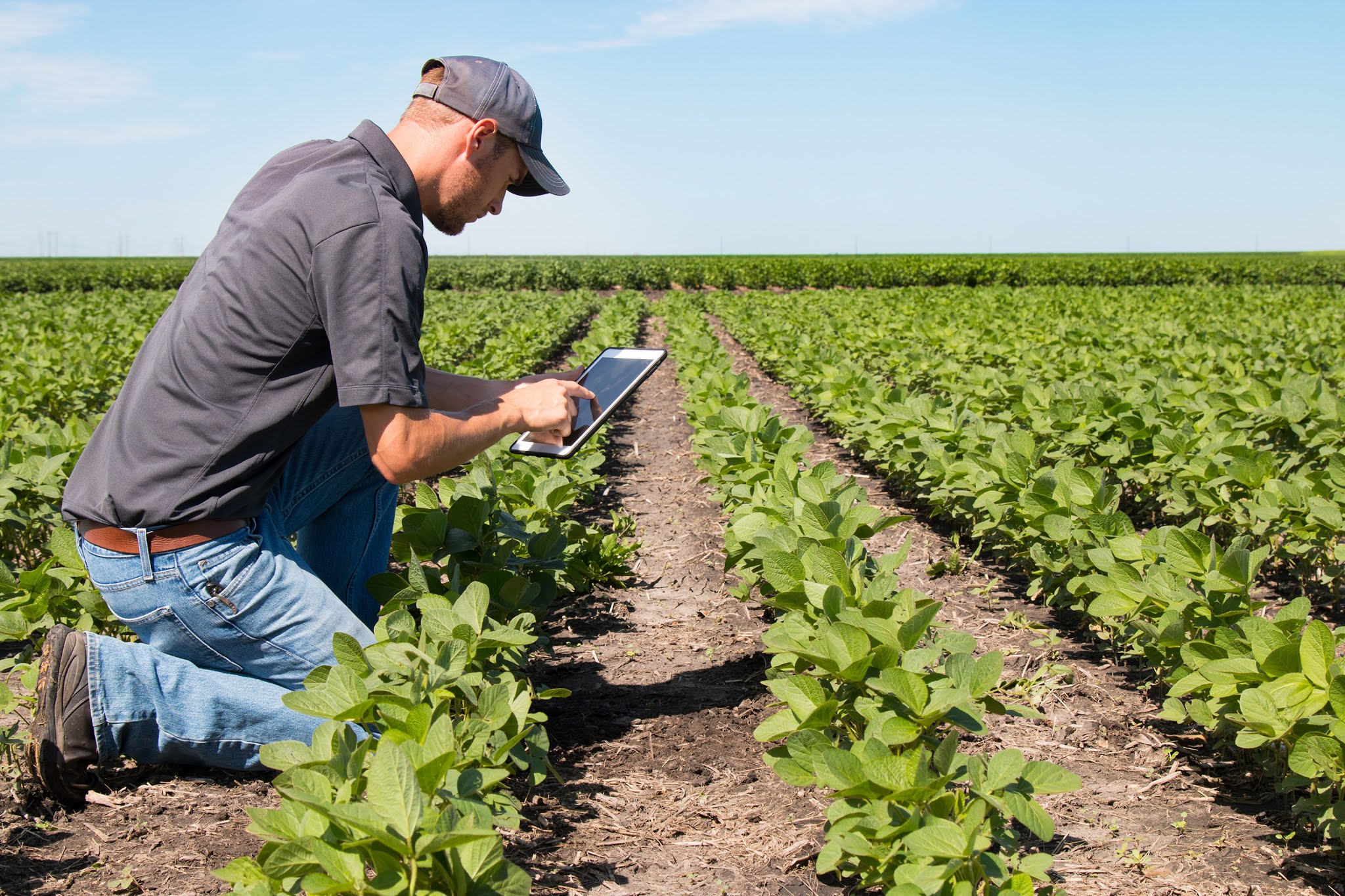 Heineken lanza un concurso para promover la agricultura sustentable