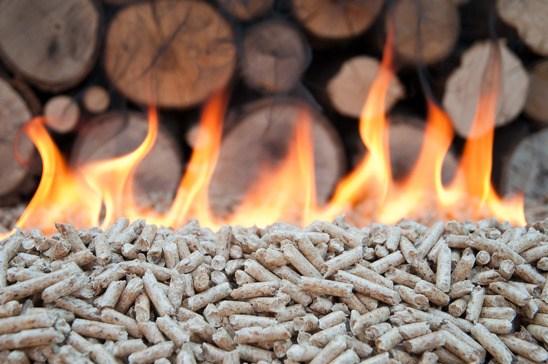 Carbón vegetal: una gran alternativa de Oaxaca para el medio ambiente