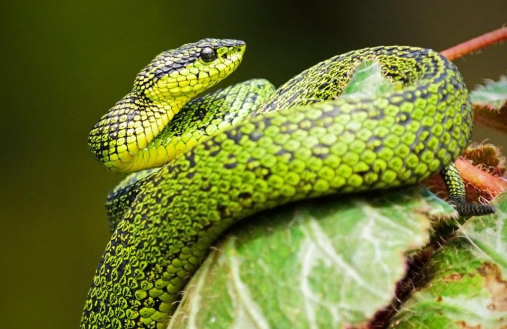 10 increíbles datos que debes conocer sobre las serpientes