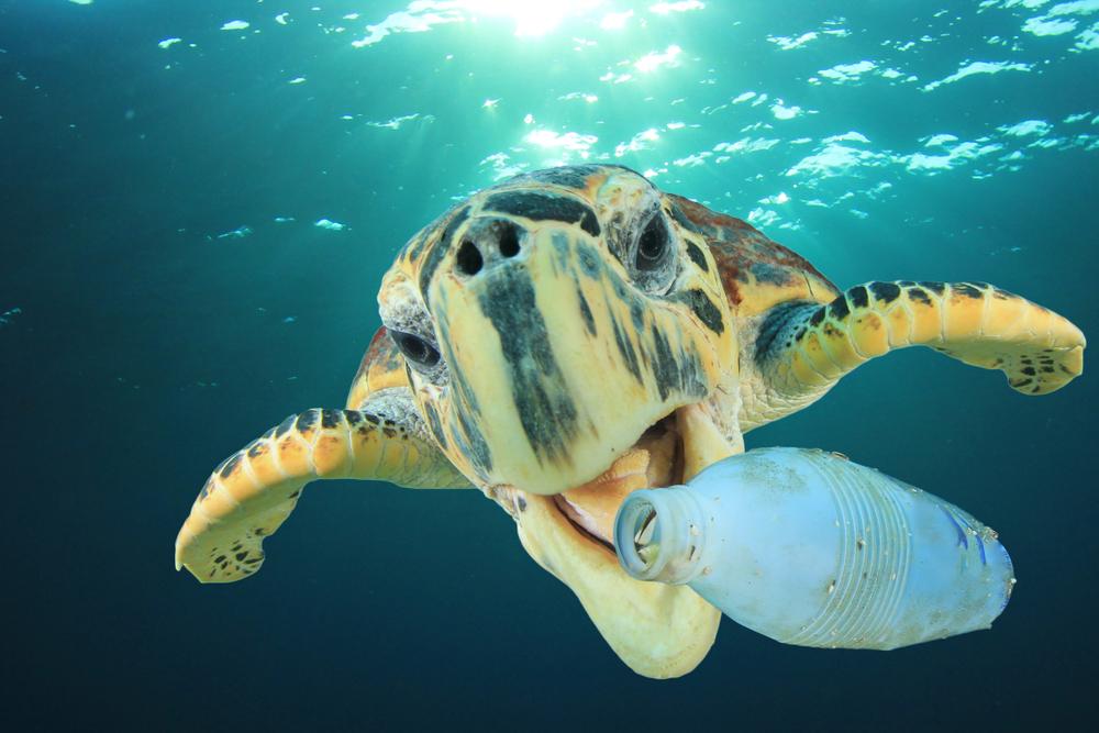 Mazatlán organizó el primer campeonato de pesca de plástico, ¡y esto fue lo que sucedió!