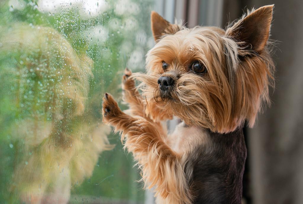 Cómo controlar (y evitar) la ansiedad por separación en los cachorros